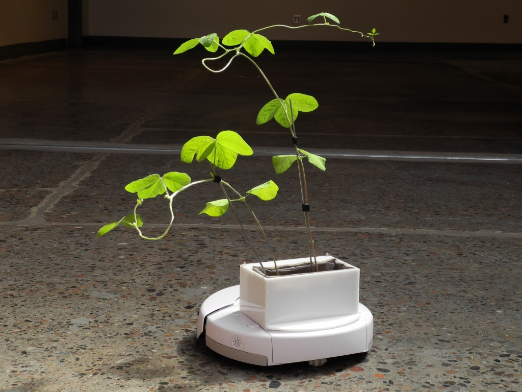 IDFA algorithmic gardening