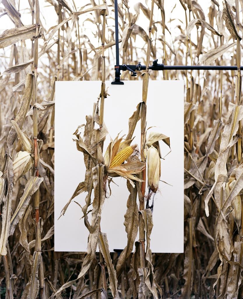 Monsanto_Book_ Mathieu Asselin