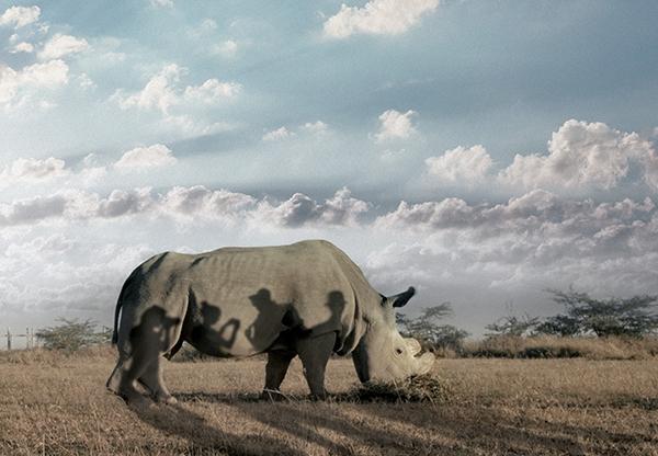Last Male on Earth Wendy Koops extinctie massa-extinctie