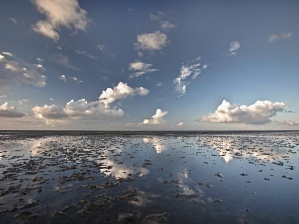 olland, natuur in de delta
